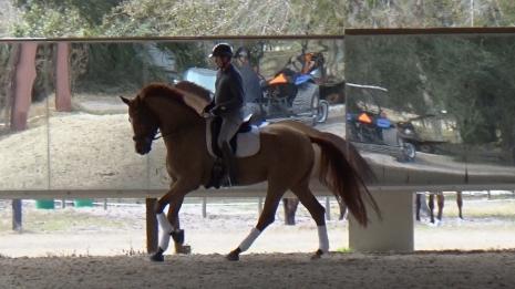 Dressage Horses for Sale - MatchnRide