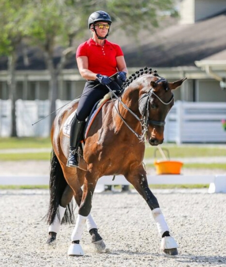 Horses for Sale and Lease - MatchnRide com